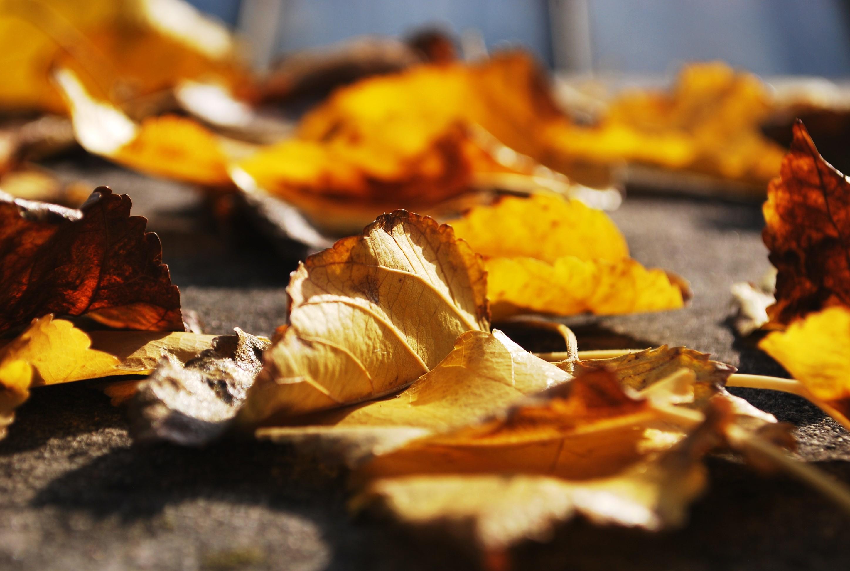 Actividades otoño 2015 Ipsimed