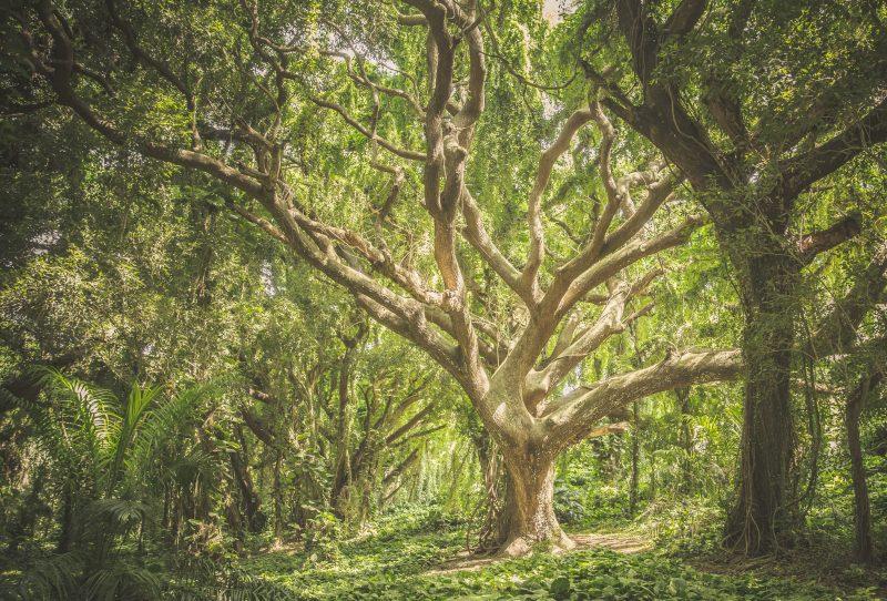 El árbol que no sabía quién era - Ipsimed